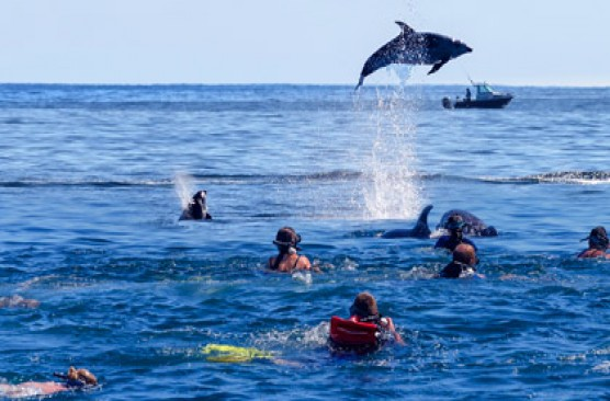 Bay of Islands Day Tour: Swim with Dolphins Cruise + Lunch